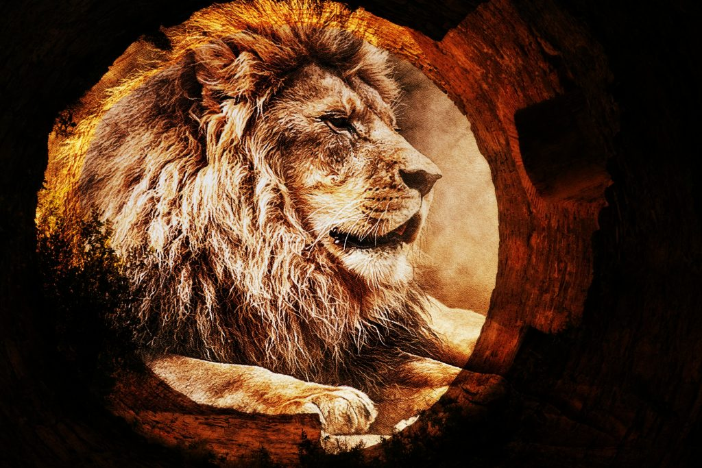 Use Cardology to Leap Through the Lionsgate and Into the New Paradigm!